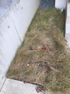芝刈りに行ってきました。神戸市